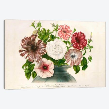 Varietes Nouvelles de Petunias Canvas Print #PCA277} by Print Collection Canvas Print