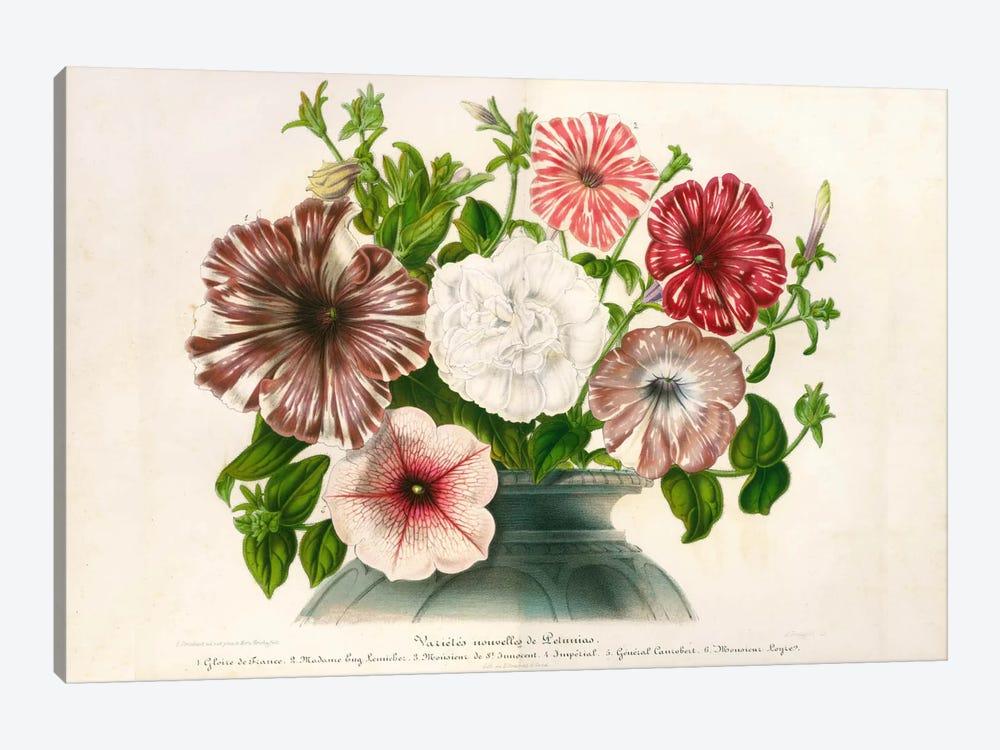 Varietes Nouvelles de Petunias by Print Collection 1-piece Canvas Wall Art