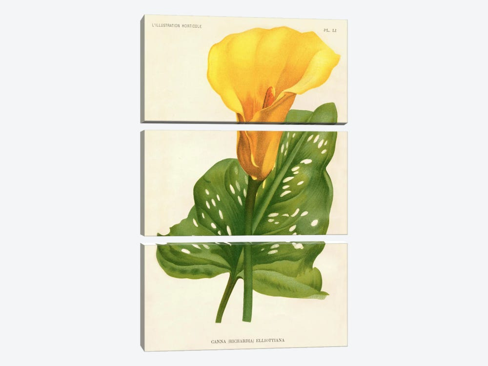 Yellow Canna Lily by Print Collection 3-piece Canvas Artwork