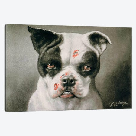 I'm a bad dog! What kind of a dog are you? Canvas Print #PCA343} by Print Collection Canvas Wall Art