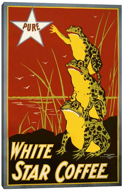 Pure White Star Coffee, Frogs Canvas Art Print