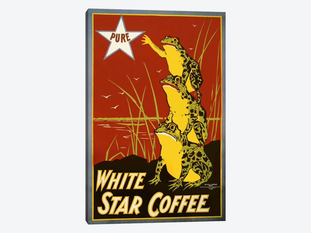 Pure White Star Coffee, Frogs by Print Collection 1-piece Canvas Print