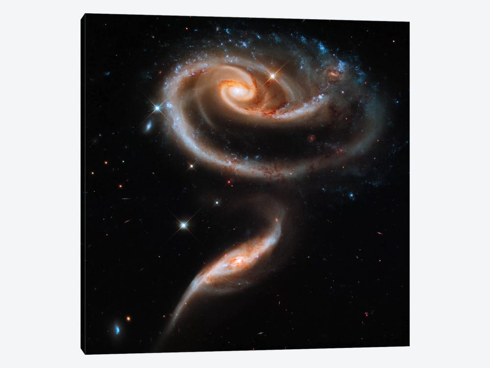 "A ""Rose"" Made of Galaxies Highlights Hubble's 21st Anniversary 1-piece Canvas Art"