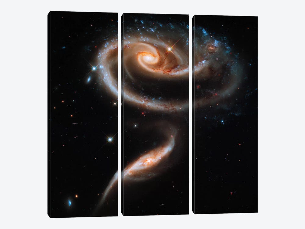"A ""Rose"" Made of Galaxies Highlights Hubble's 21st Anniversary 3-piece Canvas Wall Art"