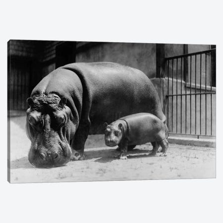 Adult and Baby Hippopotamus Canvas Print #PCA421} by Print Collection Art Print