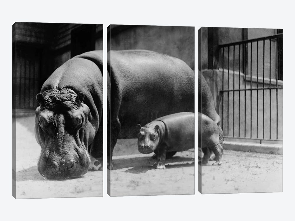 Adult and Baby Hippopotamus by Print Collection 3-piece Art Print