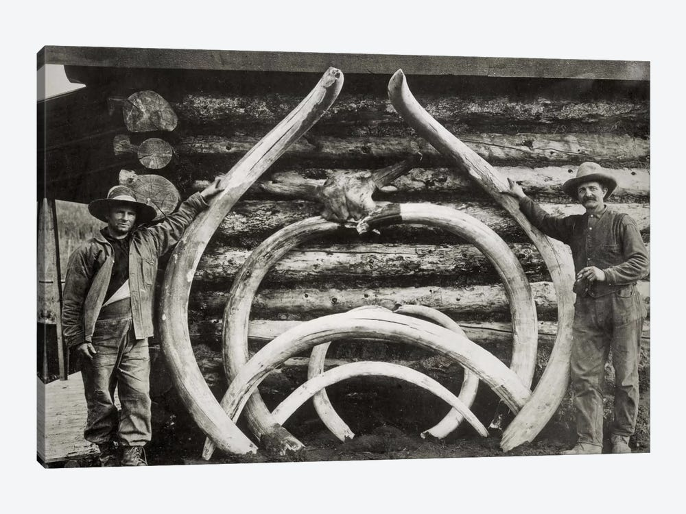 Ancient Bones of Mastodons by Print Collection 1-piece Canvas Art