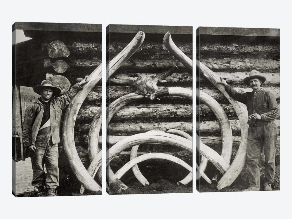 Ancient Bones of Mastodons by Print Collection 3-piece Canvas Art