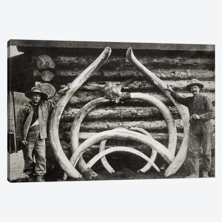 Ancient Bones of Mastodons Canvas Print #PCA444} by Print Collection Canvas Wall Art