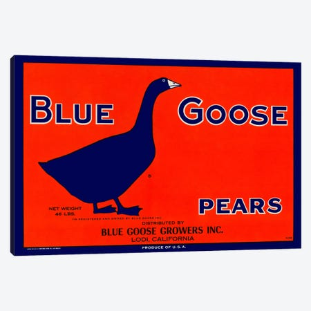 Blue Goose Pears Canvas Print #PCA53} by Print Collection Art Print