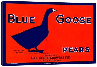 Blue Goose Pears Canvas Art Print
