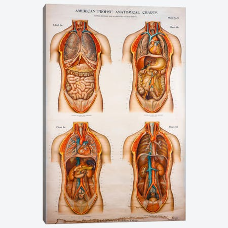American Frohse Anatomical Wallcharts, Plate 2 Canvas Print #PCA78} by Print Collection Canvas Print