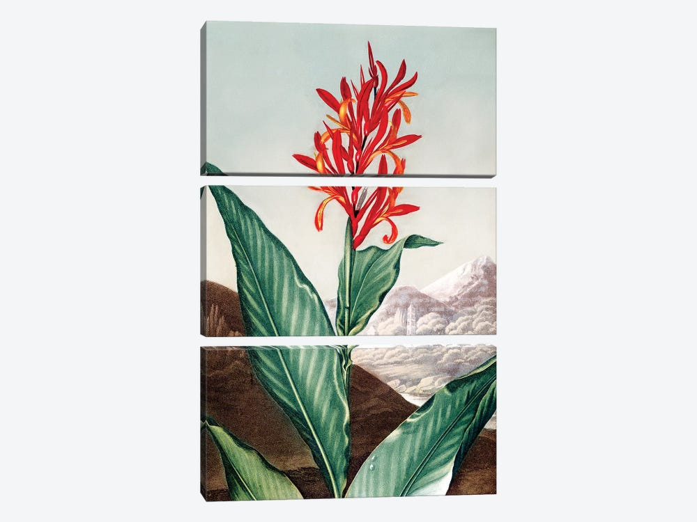 Indian Reed by Peter Charles Henderson 3-piece Canvas Wall Art