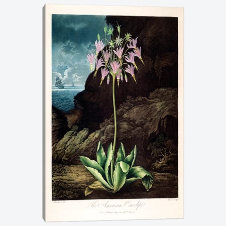 The American Cowslip Canvas Print #PCH2} by Peter Charles Henderson Art Print