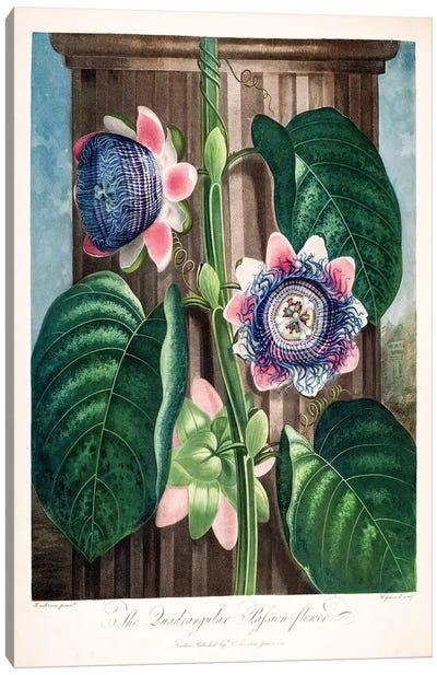 The Quadrangular Passion Flower Canvas Art Print
