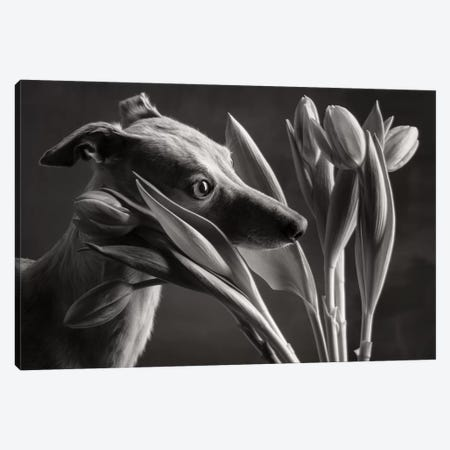 Galgo 2018 Germany II 3-Piece Canvas #PCI23} by Paul Croes Canvas Artwork