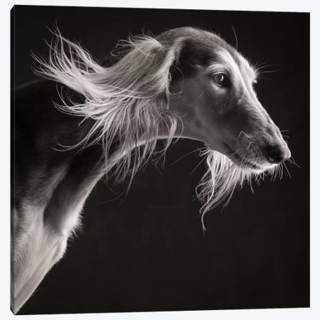 Saluki 2017 Germany 3-Piece Canvas #PCI34} by Paul Croes Canvas Artwork