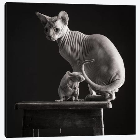 Sphynx Cat And Naked Rat 2016 Belgium Canvas Print #PCI38} by Paul Croes Canvas Art Print