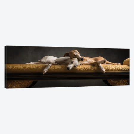 Whippet 2014 Italy Canvas Print #PCI42} by Paul Croes Canvas Wall Art