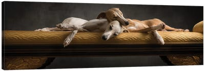 Whippet 2014 Italy Canvas Art Print