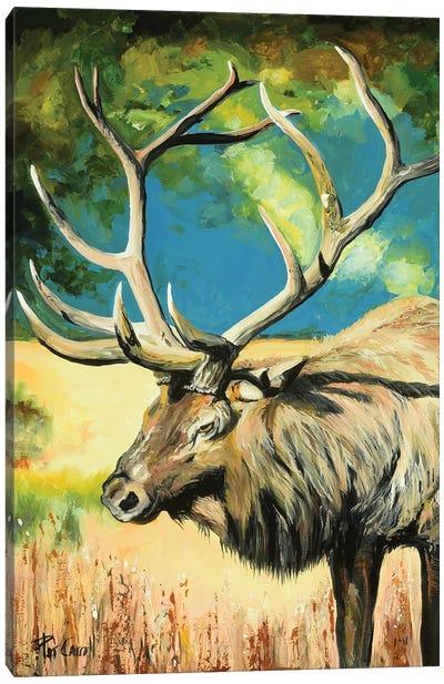 Elk At Sunset Canvas Art Print
