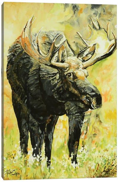 Moose On The Loose Canvas Art Print