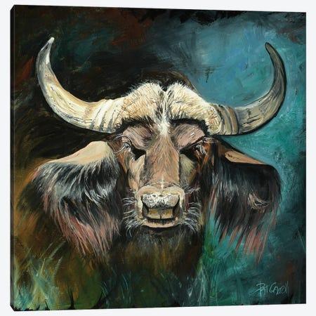 Cape Buffalo Canvas Print #PCL5} by Patricia Carroll Canvas Wall Art