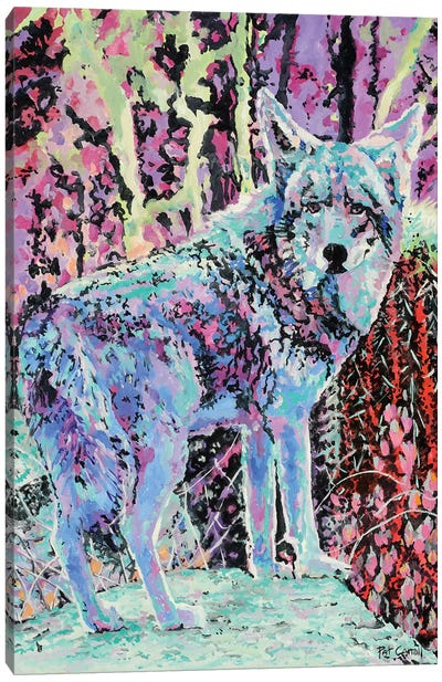 Colorful Coyote Canvas Art Print