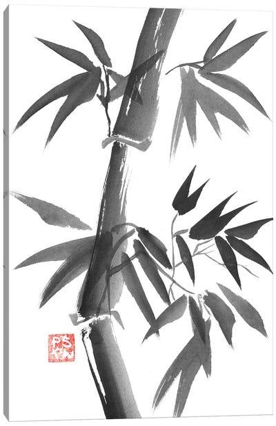 Bamboo Canvas Art Print