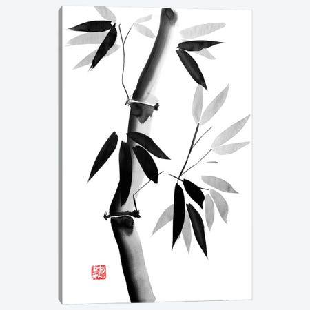 Old Bamboo Canvas Print #PCN114} by Péchane Canvas Artwork