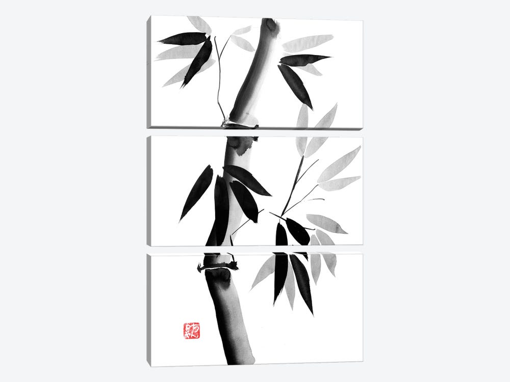 Old Bamboo by Péchane 3-piece Canvas Artwork