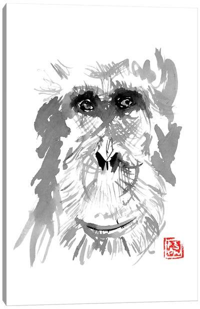 Old Orangutan Canvas Art Print