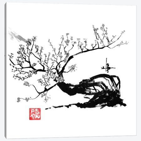 Old Tree Canvas Print #PCN116} by Péchane Canvas Wall Art