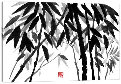 Bamboo Forest Canvas Art Print