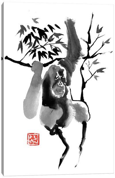 Orangutan In Tree Canvas Art Print