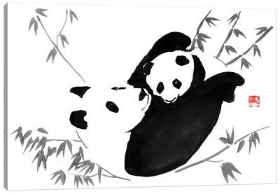 Panda Family Canvas Art Print