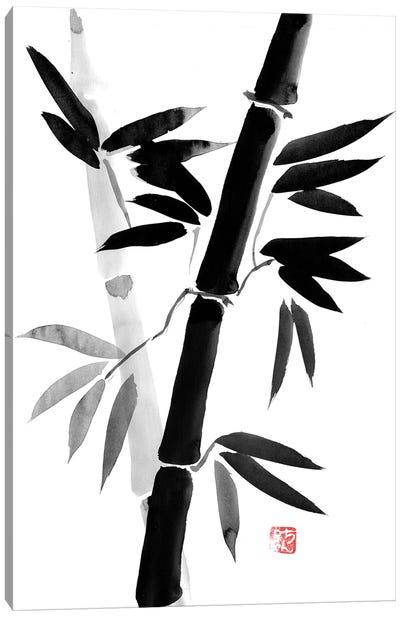 Black Bamboo Canvas Art Print
