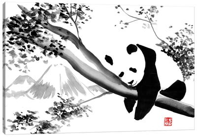 Panda's Tree Canvas Art Print