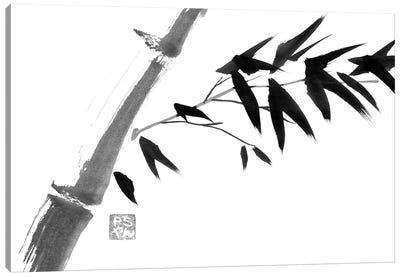 River Bamboo Canvas Art Print
