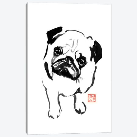 Bulldog I Canvas Print #PCN18} by Péchane Canvas Artwork
