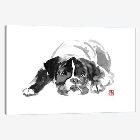 Bulldog II Canvas Print #PCN19} by Péchane Canvas Wall Art