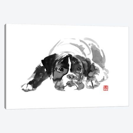 Bulldog II Canvas Print #PCN19} by Péchane Canvas Wall Art