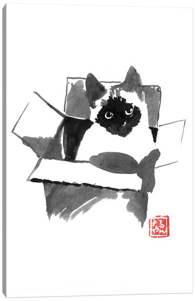 Cat In The Box Canvas Art Print