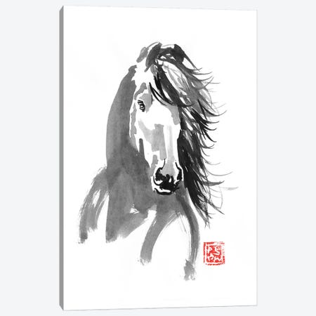 Horse In The Wind Canvas Print #PCN225} by Péchane Canvas Artwork