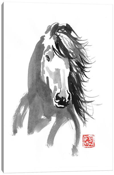 Horse In The Wind Canvas Art Print