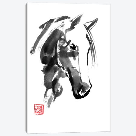 Little Horse Canvas Print #PCN229} by Péchane Art Print