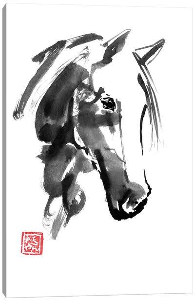 Little Horse Canvas Art Print