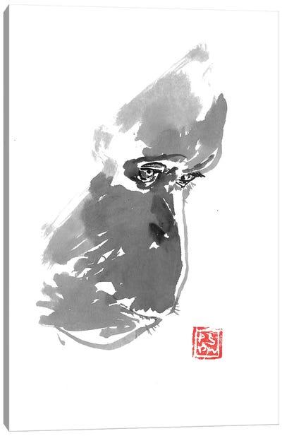 Sad Orangutan Canvas Art Print