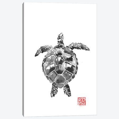 Tortoise Canvas Print #PCN249} by Péchane Art Print