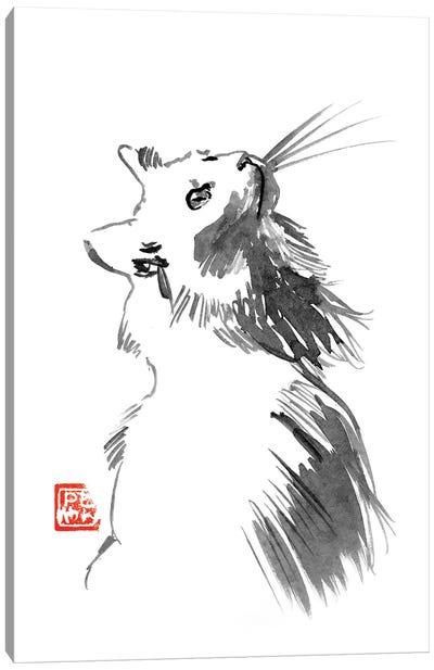 Chat Blanc Canvas Art Print